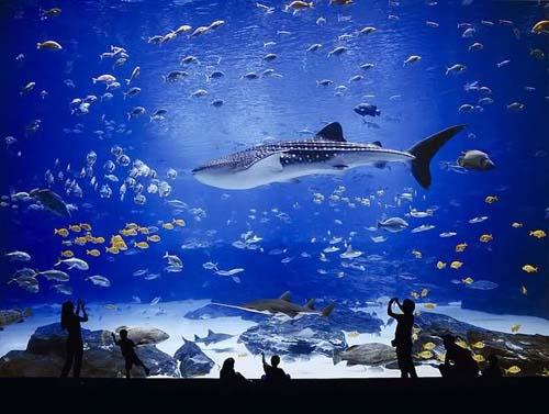 Georgia Aquarium 06