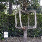 Unique and Unusual Trees 12
