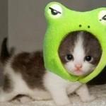 Lovely Kittens 5