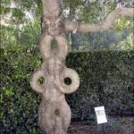 Unique and Unusual Trees 6