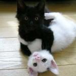 Lovely Kittens 8