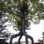 Unique and Unusual Trees 8