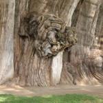 Unique and Unusual Trees 9