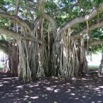 Unique and Unusual Trees 10