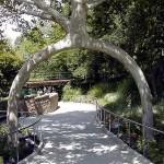 Unique and Unusual Trees 15
