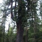 Unique and Unusual Trees 17