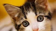 Cat hearing power
