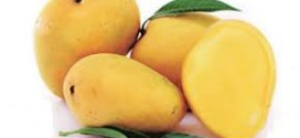 Indians know about juicy Mangoes from 3000 years