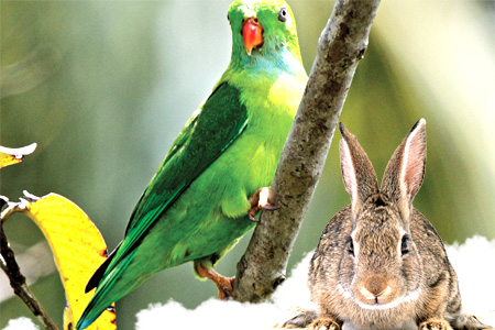 Parrot and Rabbit