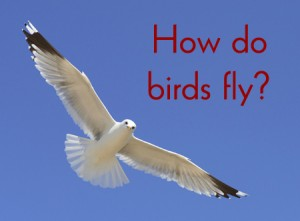 how do birds fly